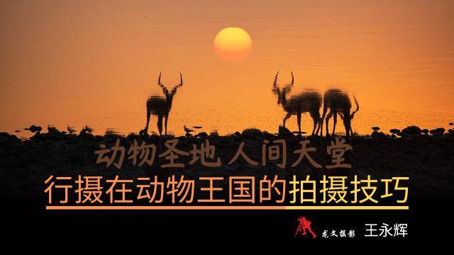 【环球行摄】行摄在动物王国的拍摄技巧