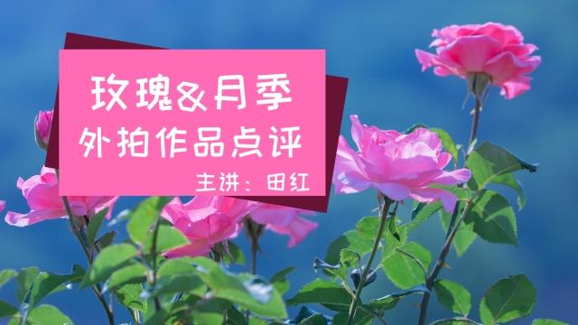 《玫瑰&月季》外拍作品点评