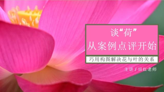【免费课程】谈荷--巧遇构图解决花与叶的关系