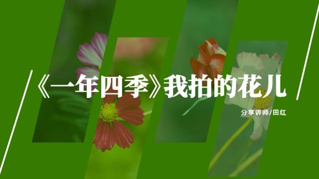 【作品分享】一年四季我拍的花儿